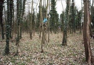 La jungle. Foto: Mathieu Pernot
