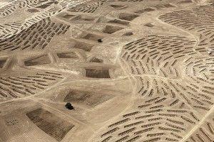 The Erasure Trilogy de Fazal Sheikh. Desert Bloom
