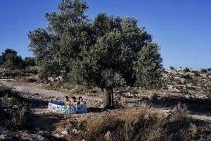 Tres chicos se refrescan en una piscina de plástico bajo un árbol en Kufr Ni`ma.  El acceso al agua para los palestinos es muy complicada mientras en los asentamientos judios a escasos metros no hay problema. Foto: Tanya Hadjouqa
